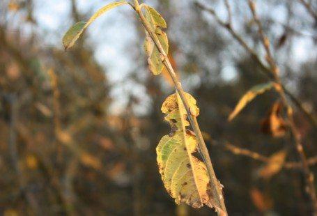 Leaf in autumn denmark