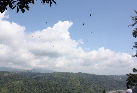 birds flying over Rio Blanco in ecuador