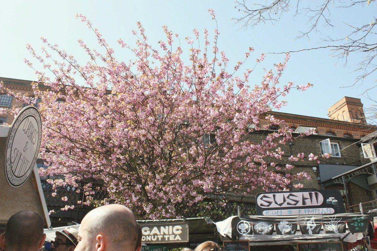 Cherry tree camden food market