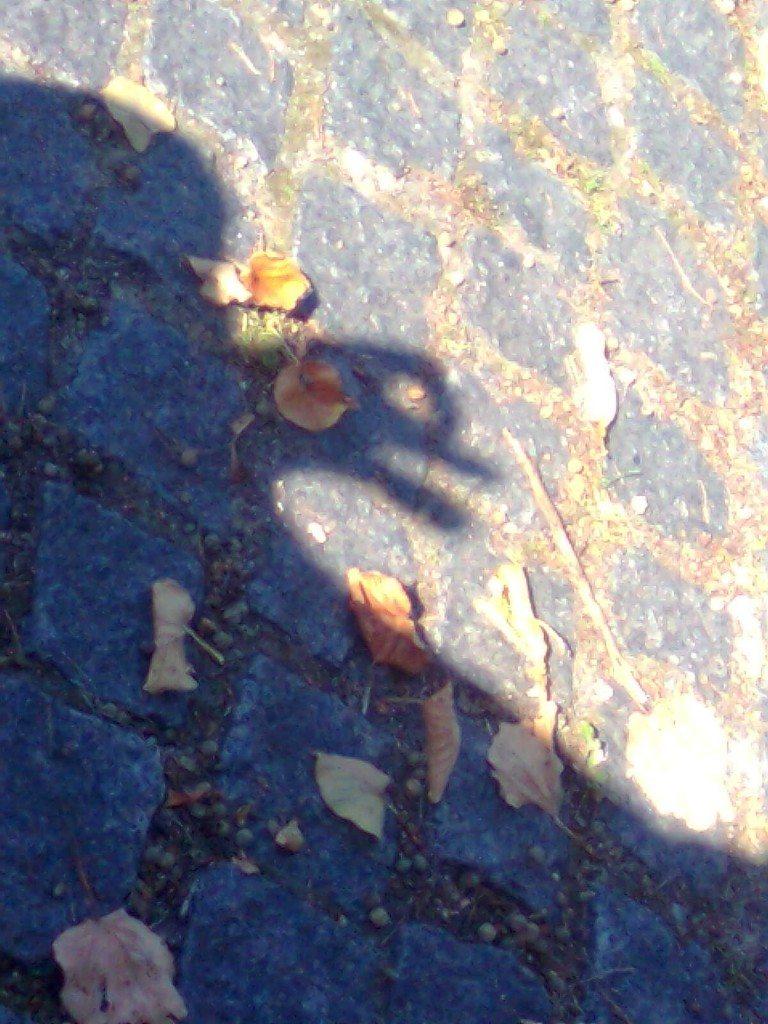 shadow duck lol
