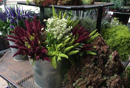 greens and flowers in copenhagen