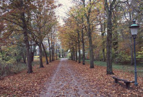 a walk near roskilde in nature