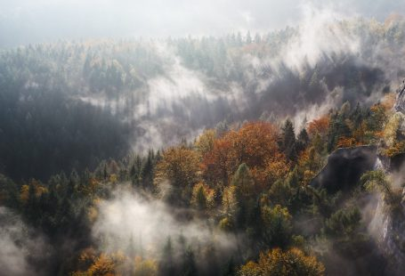 autumn shot of forest from above misty