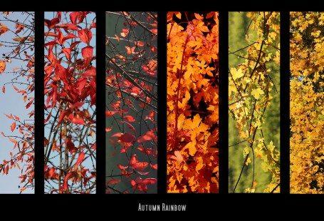 autumn_rainbow_2010