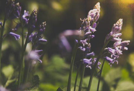 purple flowers in bloom zoom