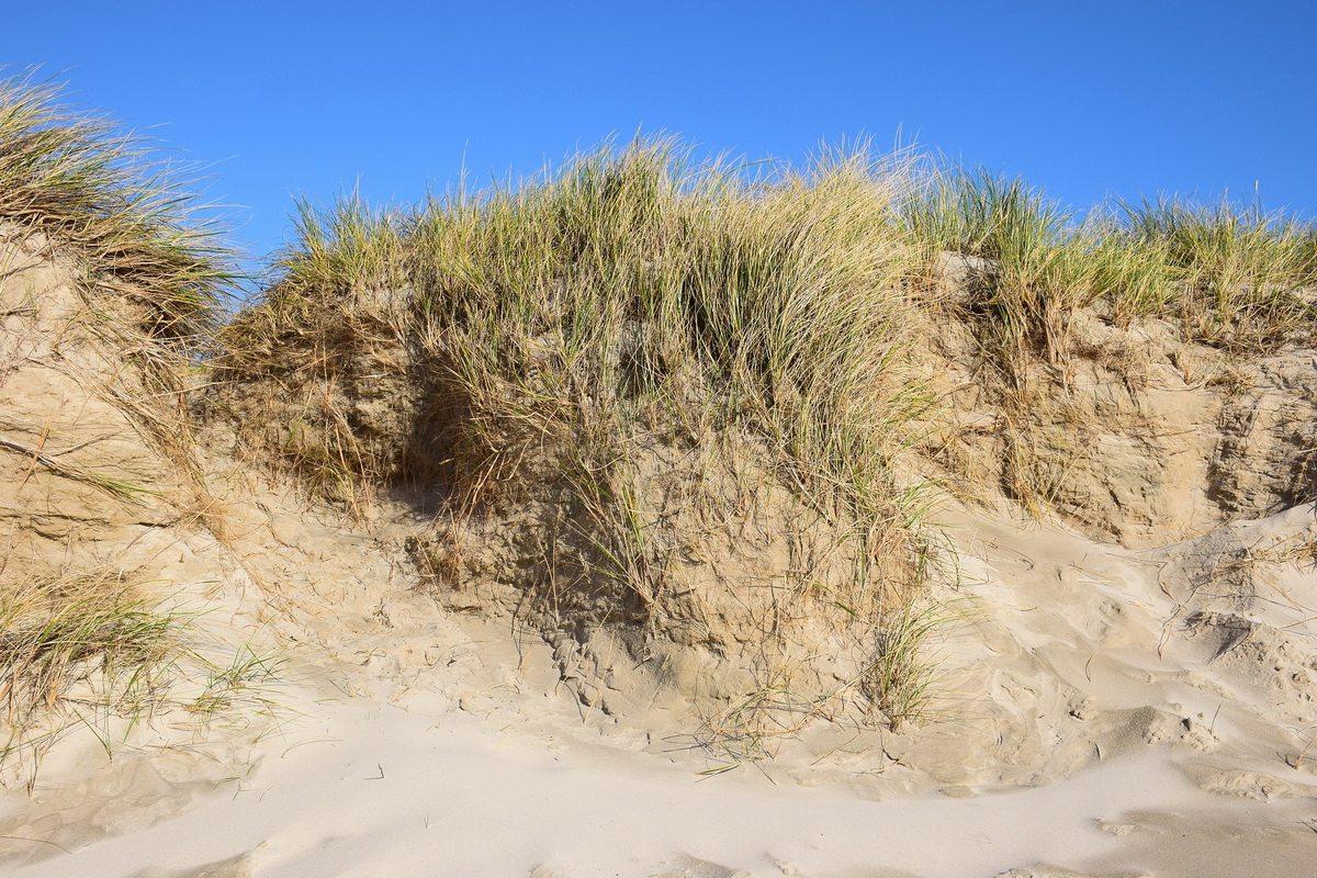 dune-1263713_1920