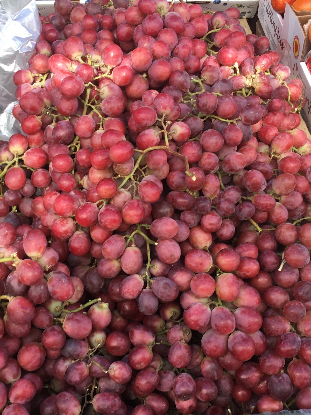fresh red grapes from Peru 2021
