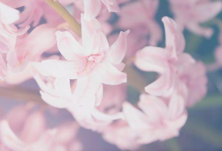 pinkflowers 2017