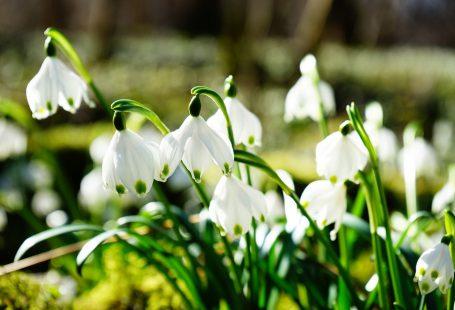 springspring white flowers