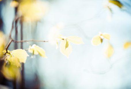 springtime leafs on tree